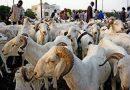 Fête de tabaski à Rufisque : Le mouton intouchable à «Diouti bi»