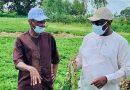 SENEGAL : QUAND L'AGRICULTURE TIRE LA CROISSANCE