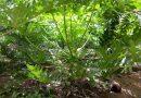 Self made du Linchirai de Kafountine: Le jeune arboriculteur Ousseynou Doumbia fait l'attraction dans la production et l'encadrement des jeunes stagiaires